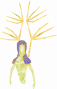 creatures:sylph_golden.png